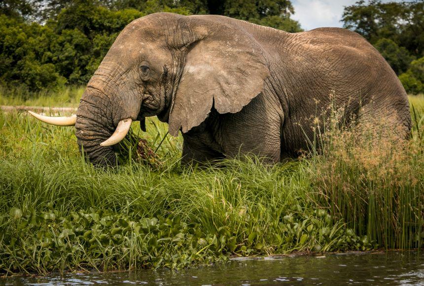 elephant-safari-uganda